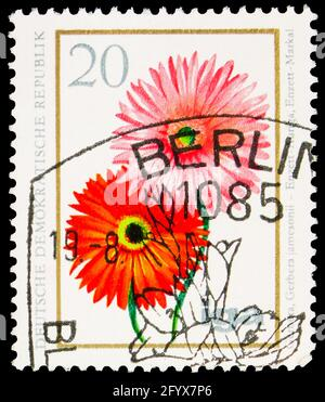 MOSCOW, RUSSIA - SEPTEMBER 27, 2019: Postage stamp printed in Germany, Democratic Republic, shows Gerbera, 20 Pf. - East German pfennig, Flowers serie