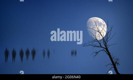 Creepy defocused people in moonlit night