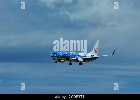 Japan Transocean Air, JTA, Boeing B-737/800, JA 05RK, Whaleshark, Landing, Naha Airport, Naha, Okinawa, Ryukyu Islands, Japan