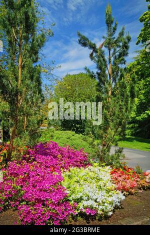 UK, North Yorkshire, Harrogate, Valley Garden Spring Flower Bed