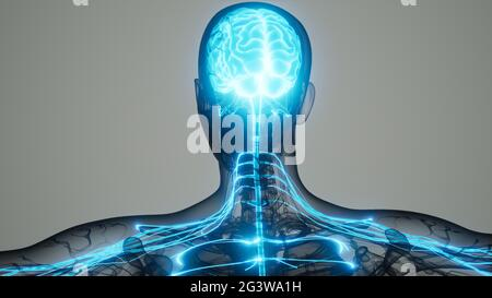 Brain and nervous system of human