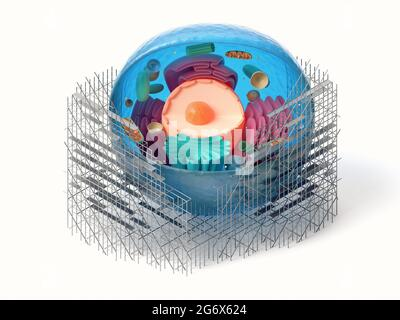 3d rendering of animal cell cross section with scaffoldings isolated on white. Biological cell repair concept