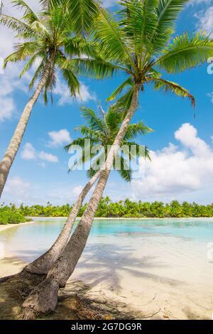 Beach with palm trees at the lagoon of Fakarava, French Polynesia.