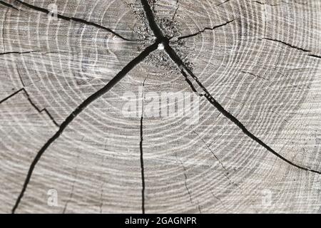 Wooden texture of tree trunk, close up