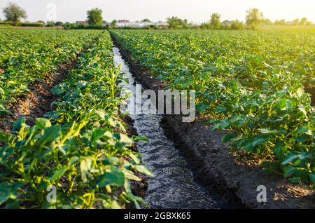 Water flows through an irrigation canal. Watering the potato plantation. roviding the field with life-giving moisture. Surface irrigation of crops. Eu