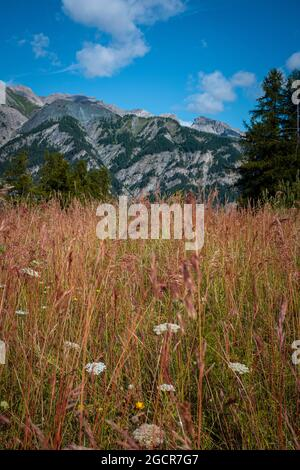 Mountain landscape ground pov with yellow grass and beautiful top view - blue sky with clouds - environment and nature outdoor panorama