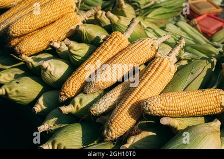 Fresh Raw Yellow Maize Corns In Heap On Local Agricultural Market. Maize Corn Harvest.