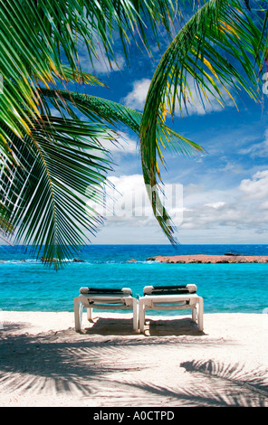 Two beach chairs under palm tree on beach in Curacao - Stock Photo