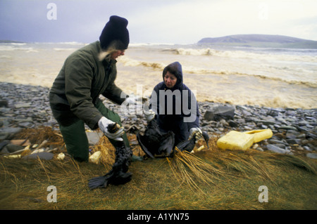 WOMEN COLLECTING DEAD SEA BIRDS KILLED BY THE BRAER OIL TANKER DISASTER SHETLAND - Stock Photo