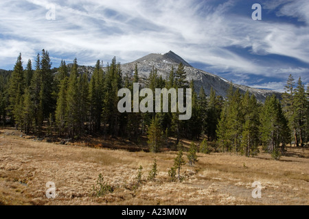 Cirrus clouds and forest, near Tioga Pass in Yosemite National Park. - Stock Photo