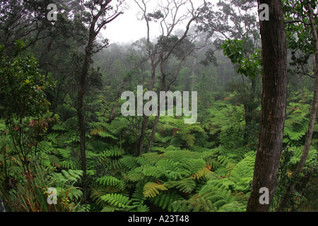 Thurston Lava Tube trail HVNP Kilauea Island of Hawaii - Stock Photo