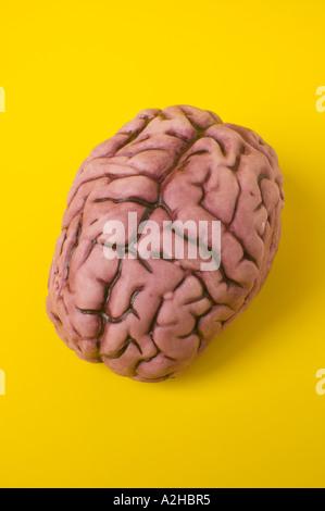 Human brain model on yellow background - Stock Photo