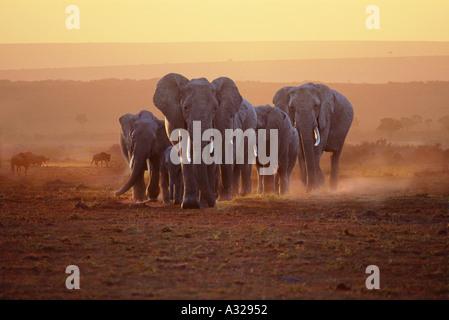 Elephant family at dawn Masai Mara Kenya - Stock Photo