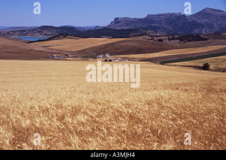 An Andalucian landscape near near Antequera in the Andalucian Lakes. - Stock Photo