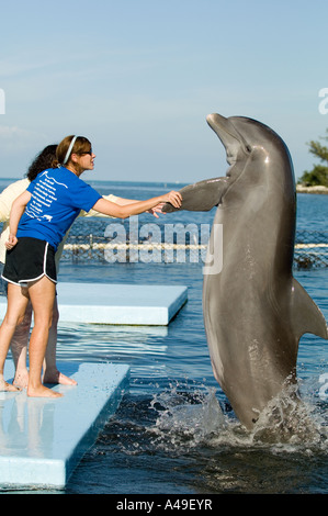 USA Florida Keys Dolphins entertaining at Dolphin Research Center Grassy Key Florida - Stock Photo