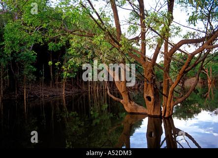 flora, Urubu canal, arm of the Puraquequara River, northeast of the city of Manaus, Amazon, Amazon River Basin, - Stock Photo