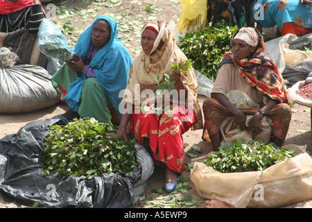 Harar, Ethiopia, women selling bundles of Qat in the market - Stock Photo