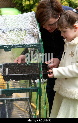 Mother helping her young daughter place planted seed trays into small plastic greenhouse for germination in early - Stock Photo