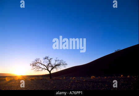 Tourists dwarfed by Dune 45 in Namibia as they climb in the early morning. - Stock Photo