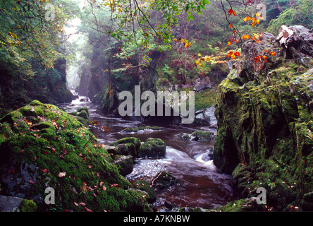 fairy glen river conwy gorge autumn colours near betws-y-coed snowdonia national park north wales gb uk - Stock Photo
