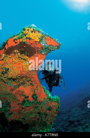 France, Corse du Sud, diver near a colorful wall (100 ft depth) - Stock Photo