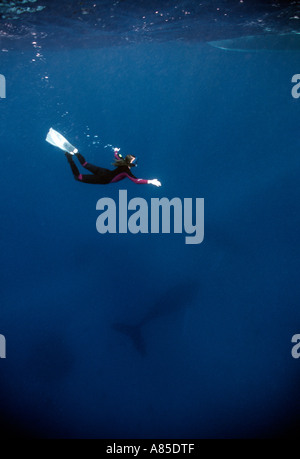 Silverbanks Dominican Republic underwater humpback whale and free diver megaptera novaeangliae - Stock Photo
