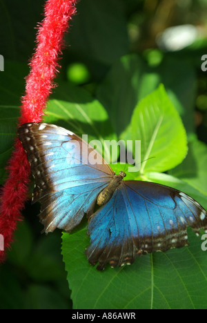 USA Florida Key West Butterfly Nature Conservatory - Stock Photo