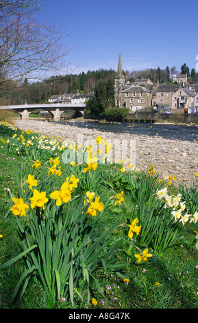 Spring daffodils looking up to Langholm Bridge biult by Thomas Telford at Langholm Dumfries and Galloway Scotland - Stock Photo
