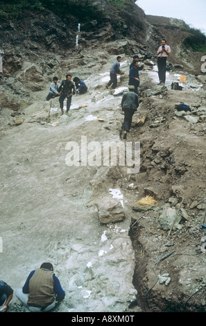Sauropod excavation 1982 - Stock Photo