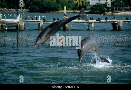 Dolphin Sanctuary, Florida Keys, USA - Stock Photo