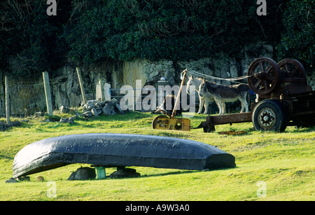 County Galway, Ireland. Donkeys and traditional skin curragh boat on island of Inisheer one of the Aran Islands, - Stock Photo