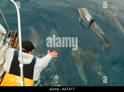 A sailor on an ocean crossing passage reaches out to try and touch dolphins swimming near the bow of his sailboat. - Stock Photo