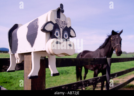 Juxtaposition - Artistic Folk Art Cow Mailbox and Black Horse, Pasture, Fraser Valley, Southwestern BC, British - Stock Photo