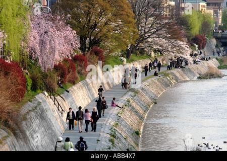 People Walking along the Kamogawa or Kamo River at Sunset During Cherry Blossom Season, Kyoto, Japan - Stock Photo