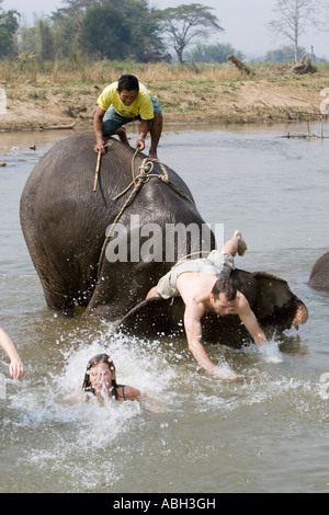 Elephants splash and play throwing off young tourists in river on trek near Pai north Thailand - Stock Photo