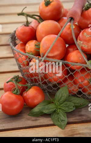 selection of organic tomatoes in basket on slated surface - Stock Photo