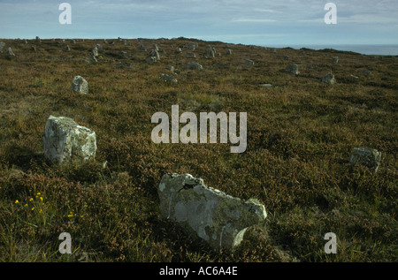 Hill O Many Stanes ( Stones) Nr Lybster  Caithness Highland Scotland HOMER SYKES - Stock Photo