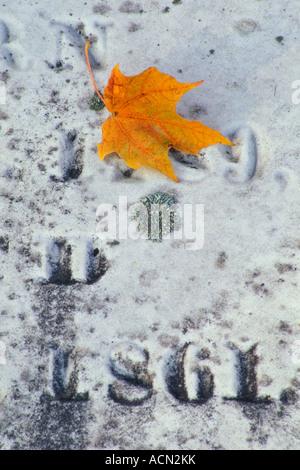 Fallen maple leaf on marble gravestone - Stock Photo