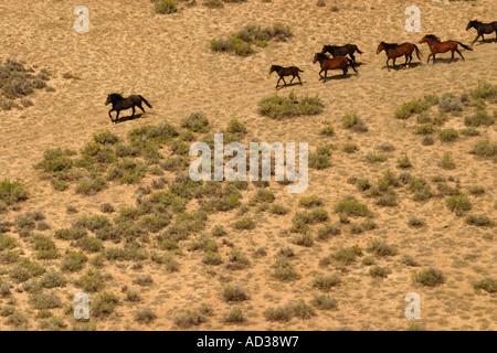 A herd of wild horses run across the red desert in Wyoming, USA. - Stock Photo