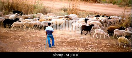 Young Turkish Shepherd with flock - Evening - Turkey - Stock Photo