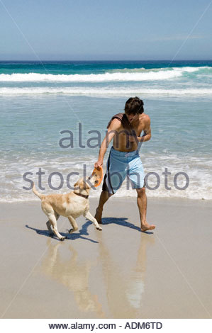 Man playing with labrador on beach - Stock Photo