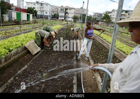 Bowery farming stock ipo