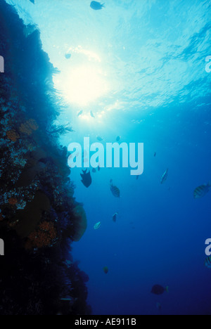 Upward view from underwater showing fish nad coral reef Cabo san Lucas Baja California Mexico - Stock Photo