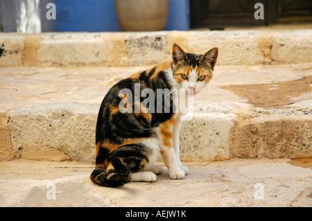 Street cat on stairs, Finestrat, Costa Blanca, Spain - Stock Photo