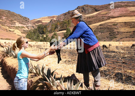 Peruvian Quechuan shepherdess handing baby lamb to Western blonde girl in Andes nr Cuzco, Peru (model release for - Stock Photo