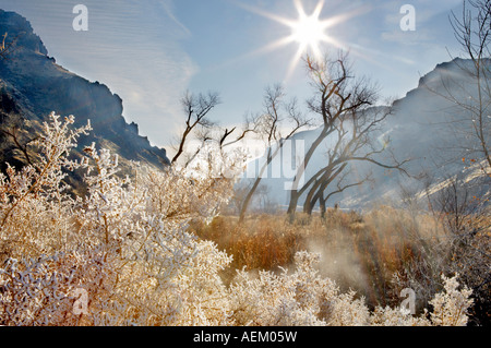 Hoar frost on plants with cottonwood trees with sun at Snively Hot Spring Owyhee River Oregon - Stock Photo