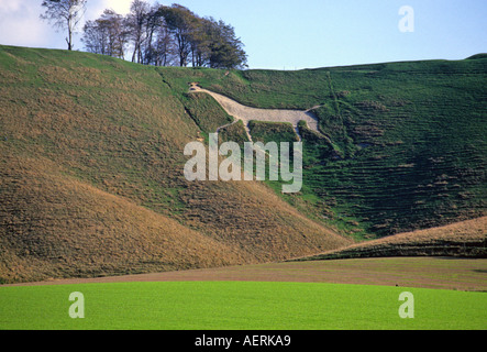 The Cherhill White Horse Wiltshire England - Stock Photo