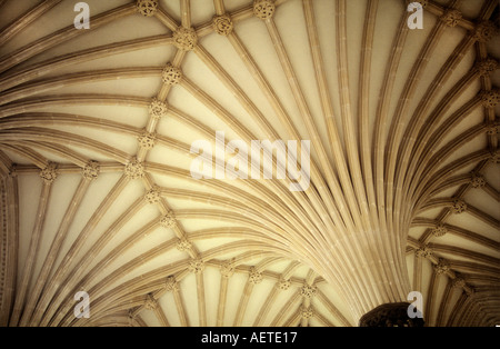 Fan vaulted ceiling of Chapter House in Wells Cathedral WELLS Somerset UK - Stock Photo
