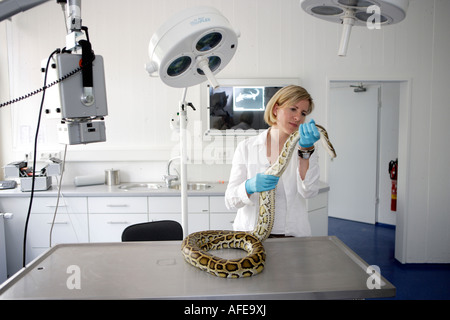 The zoo veterinary surgeon of the zoo Allwetterzoo Dr Sandra Silinski with a Python - Stock Photo
