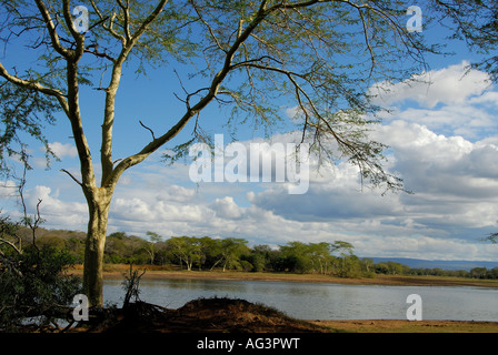 Acacia trees lining the edge of a pan in Ndumu Game Reserve, South Africa - Stock Photo